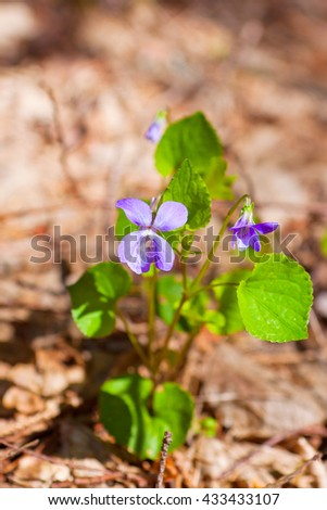 bush of delicate flowers, summer's day, close-up - stock photo