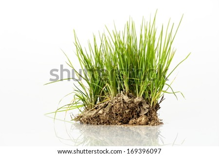 Bush of green grass from meadow - stock photo