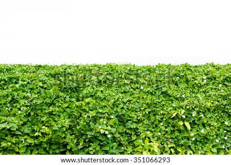 Bush of green leaf with white background. - stock photo