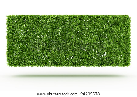 Bush wall  isolated on white - stock photo
