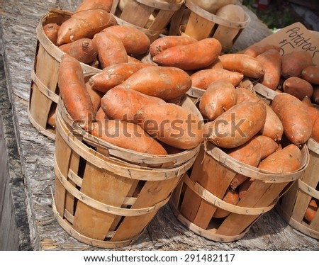 Bushels of vibrant orange colored sweet Potatoes for sale at a local farmer's market.  - stock photo