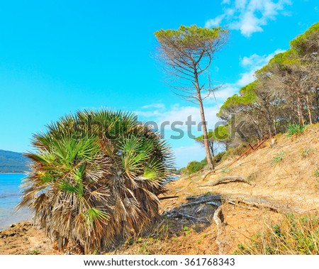 bushes and trees in Mugoni beach, Sardinia - stock photo