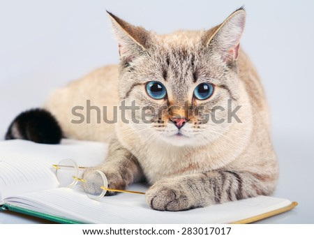 Business cat with book and glasses - stock photo