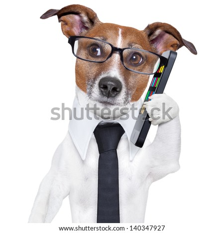 business dog with a smartphone and glasses - stock photo