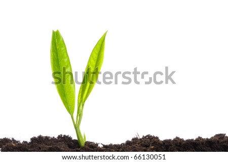 business growth concept with ypoung plant and soil on white background - stock photo