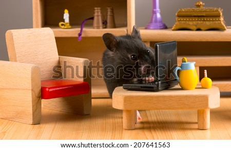 Business hamster check your E'mail on a laptop/Business hamster - stock photo