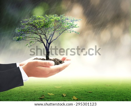 Businessman hands holding medium plant or big tree and soil with rainy over beautiful circle bokeh green light background. Ecology, World Environment Day, Business, Investment, LIT, ROI, CSR concept. - stock photo