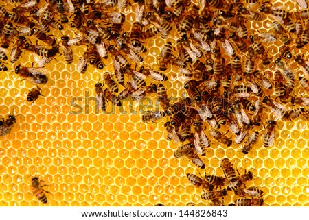 Busy bees producing honey - stock photo