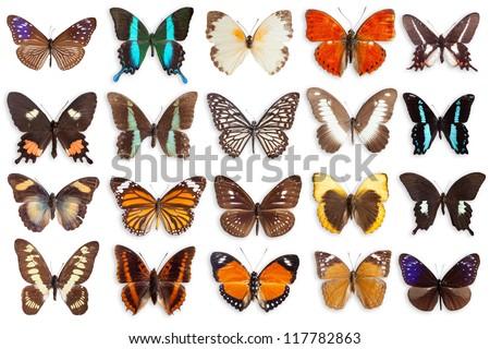 butterflies - stock photo