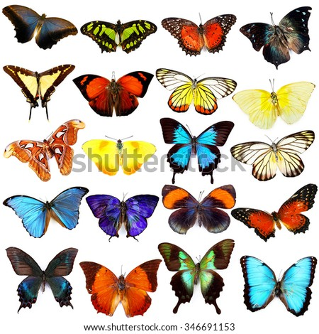 Butterflies collection, isolated on white - stock photo