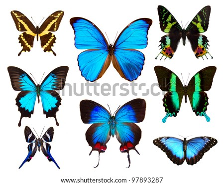 Butterflies collection, isolated on white background - stock photo