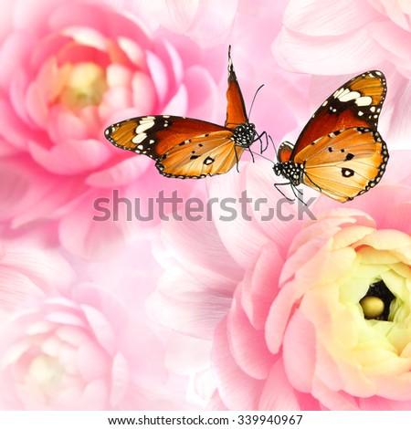 Butterflies dance on natural blurred flowers background. Butterflies of Danaus chrysippus (Plain tiger or African monarch) on natural blurred flowers background - stock photo