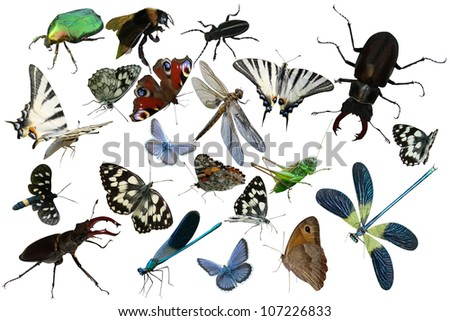 Butterflies, dragonfly, grasshopper, other insects isolated a white background beetles, spiders, insects, common stag beetle - stock photo
