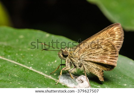 Butterflies, moths, insects - stock photo