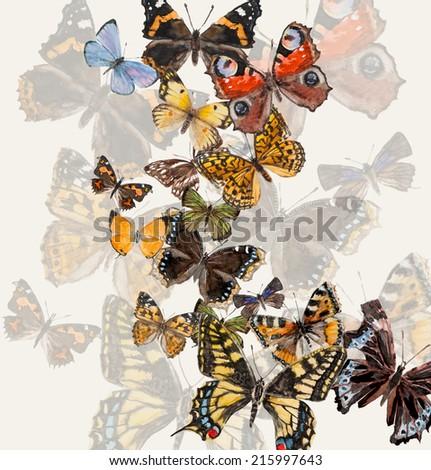 Butterflies with free space for your text in the middle, hand drawing, watercolor illustration. Russian butterflies. - stock photo