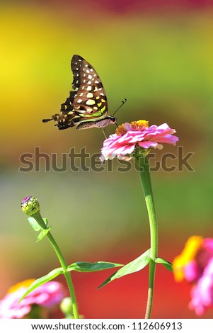 butterfly and flower - stock photo