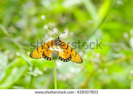 Butterfly and flower on blurry green leaf background:Close up,select focus with shallow depth of field:ideal use for background. - stock photo
