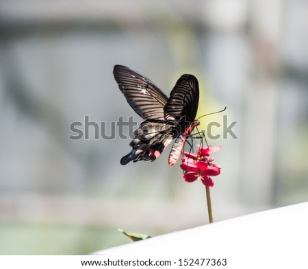 Butterfly and red flowers - stock photo