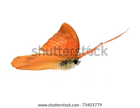 Butterfly Appias zarinda zarinda perspicua isolated on white - stock photo