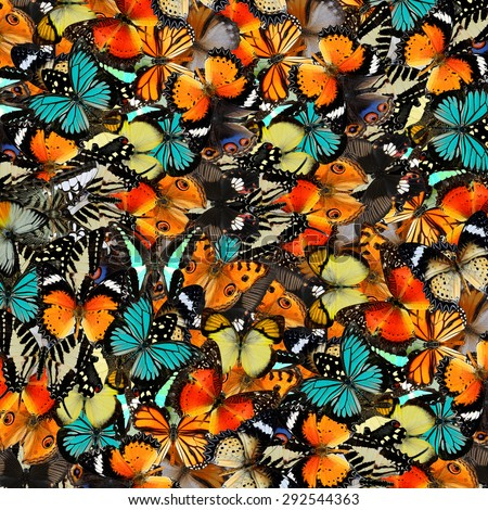 Butterfly ,beautiful pattern abstract background texture made from colorful butterfly - stock photo