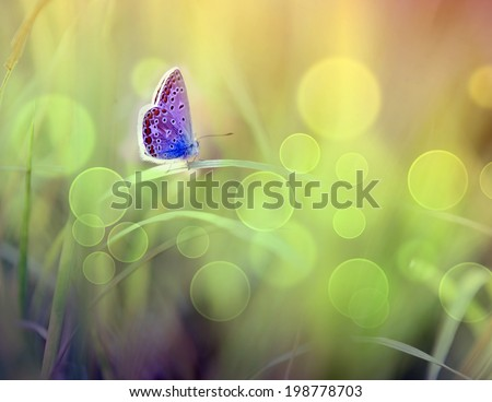 Butterfly closeup - stock photo