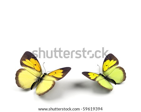 Butterfly - 3d render illustration on white background. - stock photo