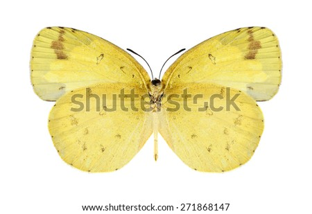 Butterfly Eurema hecabe (female) (underside) on a white background - stock photo