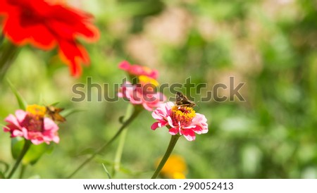 Butterfly in Nature - stock photo