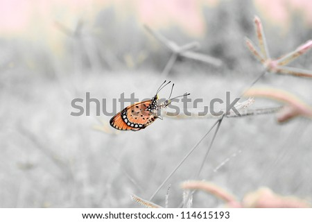 butterfly in the garden - stock photo