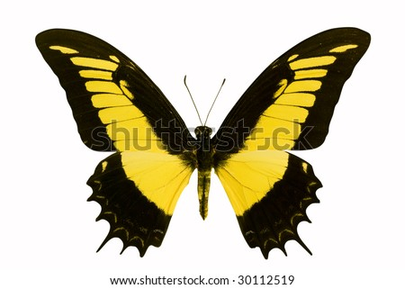 Butterfly in the white background - stock photo