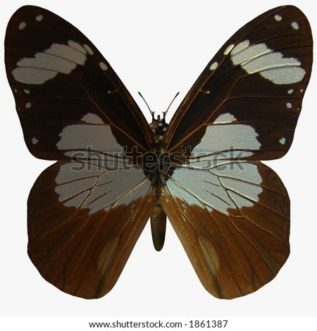 Butterfly-Ivory Merchant - stock photo