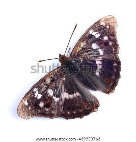 Butterfly - Lesser Purple Emperor (Apatura ilia) isolated on white - stock photo