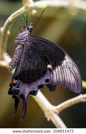 Butterfly macro - stock photo