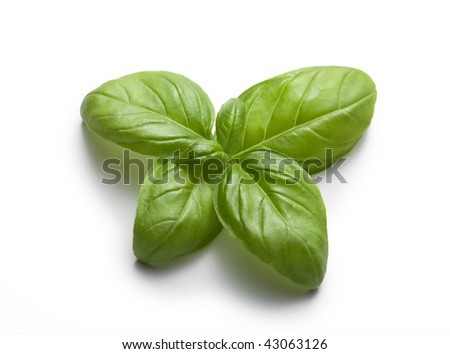 Butterfly of basil on a white background - still life - food - stock photo