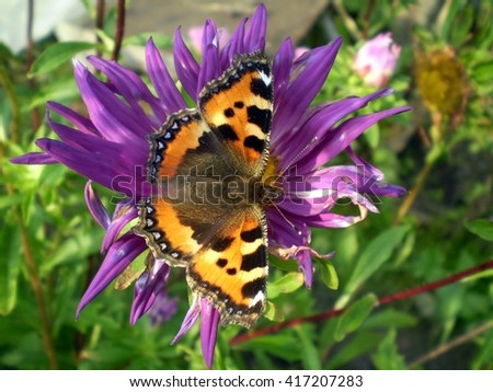 Butterfly on a blue flower - stock photo