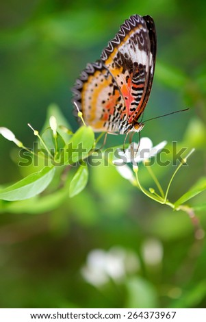 Butterfly on a flower. - stock photo