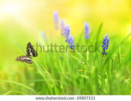 Butterfly on a meadow - stock photo