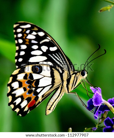 Butterfly on a violet flower - stock photo