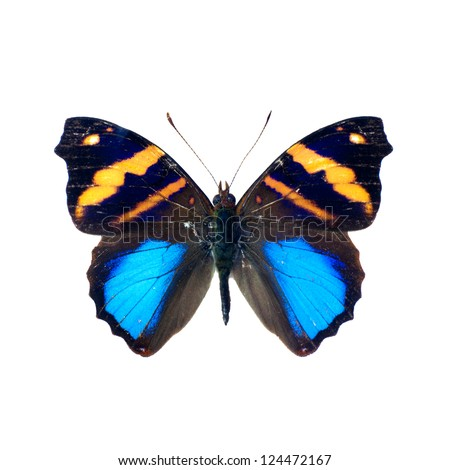 Butterfly on a white background in high definition - stock photo