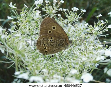 Butterfly on a white Flower - stock photo