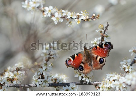 Butterfly on blossom  - stock photo