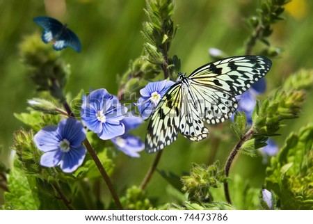 butterfly on blue flowers closeup on meadows - stock photo