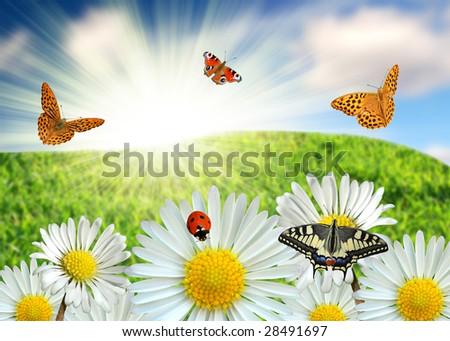 butterfly on daisy - stock photo