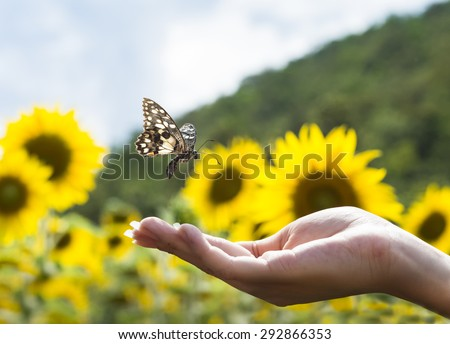 Butterfly on finger point in green field background - stock photo
