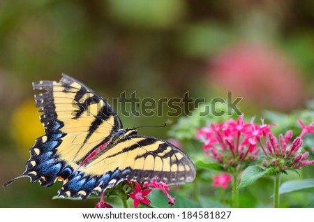 Butterfly on pink flowers - stock photo