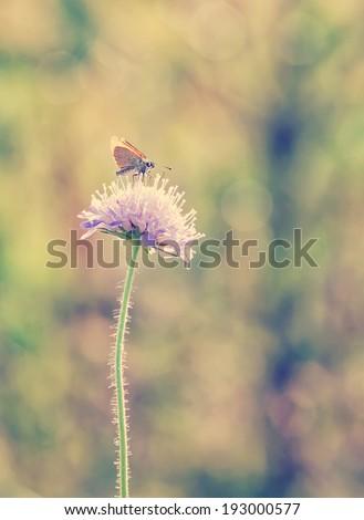 butterfly on the flower in the field, in instagram effect - stock photo
