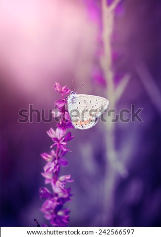 Butterfly on the wild flower - stock photo