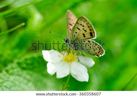 butterfly on white flower - stock photo
