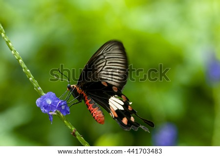 Butterfly perched on a flower blue vertical tail nicely . - stock photo