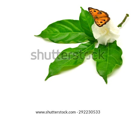 Butterfly perched on a flower on white blackground - stock photo